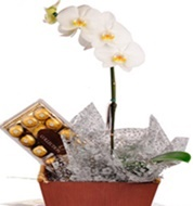 Orquidea com chocolates