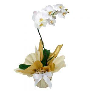 orquideas-maes1_1